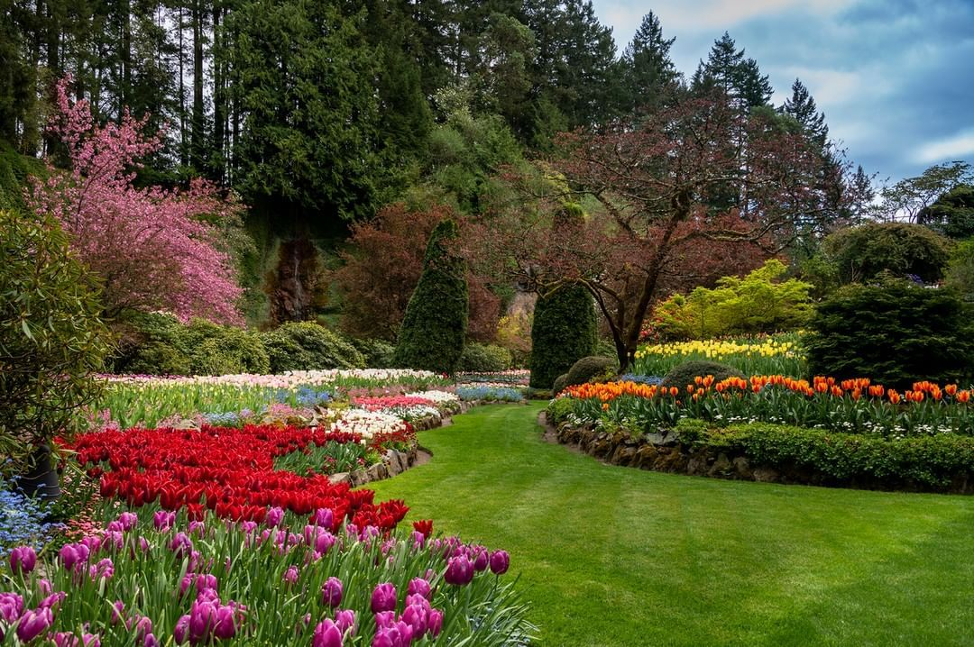 "The Butchart Gardens's Instagram photo: ""As of 9AM, Friday, May 1st, The Butchart Gardens will re-open to the public welcoming you to take solace from this beautiful garden. We…"""