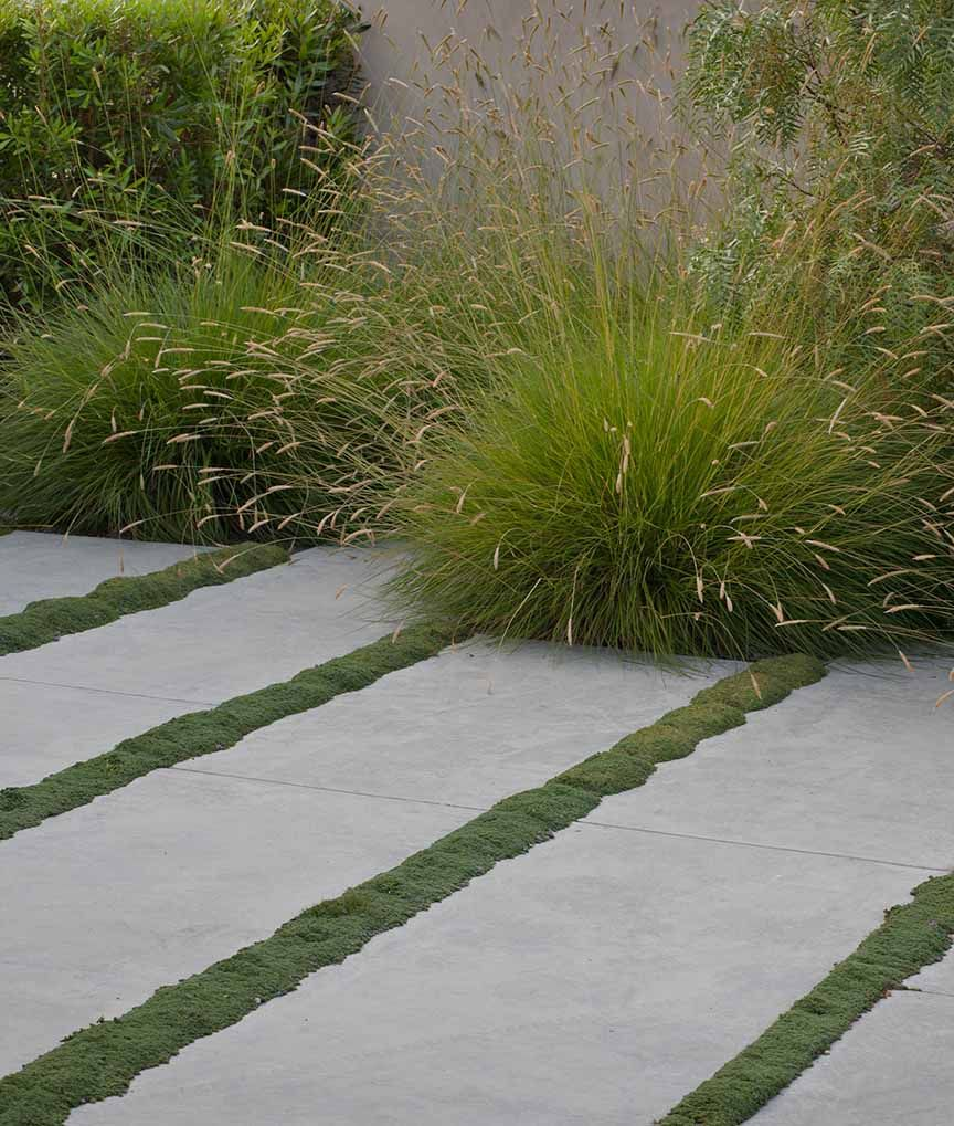 Concrete slabs with moss strips can be replicated with for Decorative lawn grass