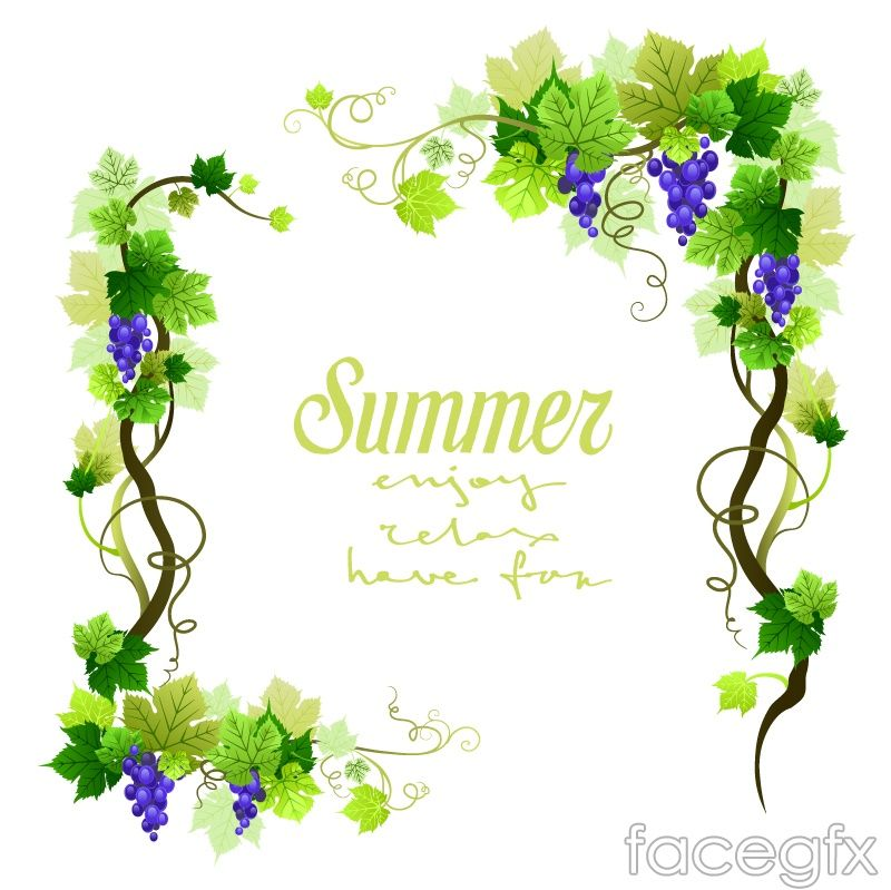 Free Download Summer Grape Vine Border Vector Free