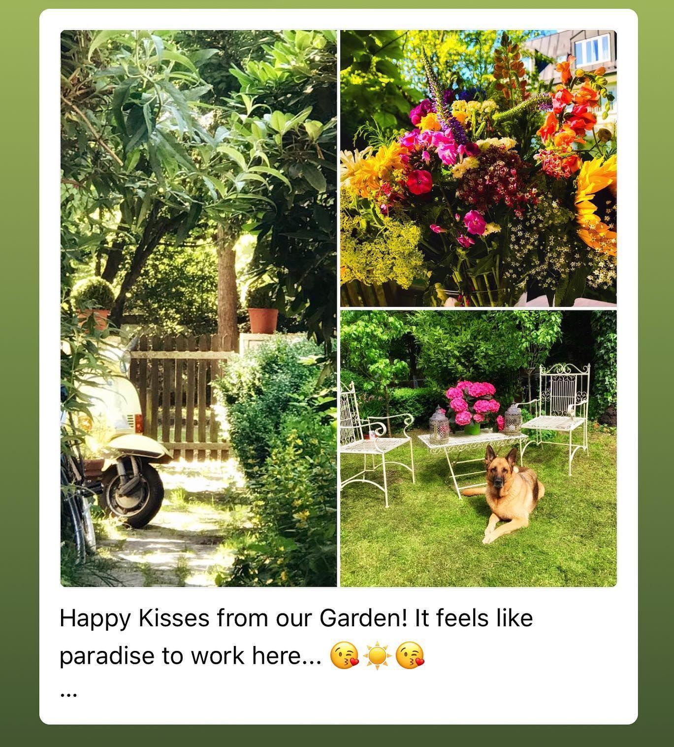 Good Morning Happy Kisses From Our Garden It Feels Like Paradise To Work Here Www Munich Property De Munchen Garte Plants Garden Munich