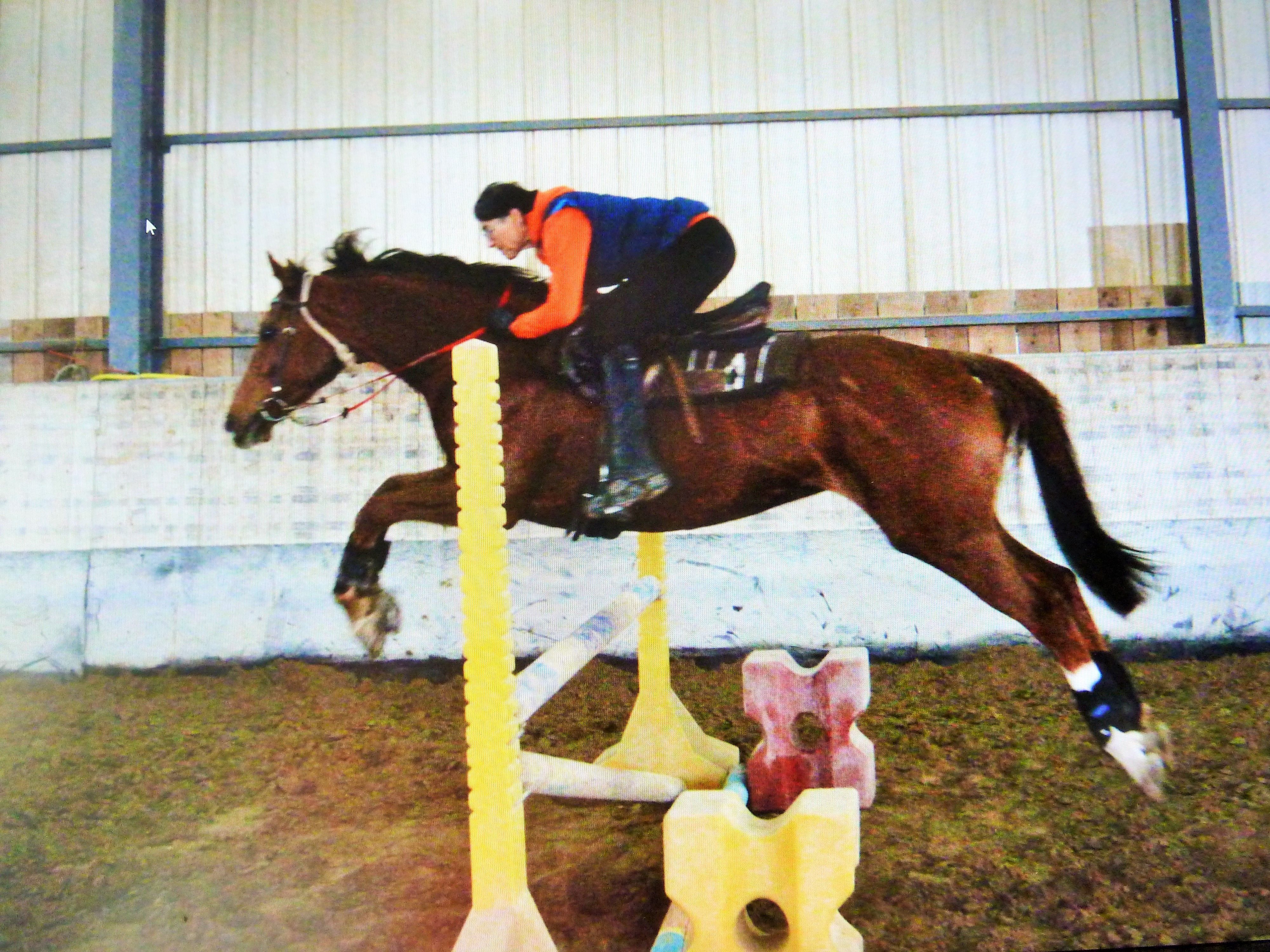 #RedHawkRupert, #GB_thoroughbred, after about a month of re-training, #gymnastics work