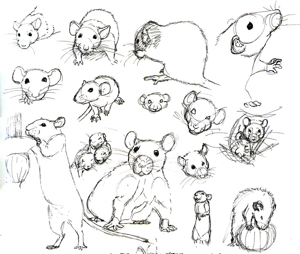 Rat Practice 10 by nEVEr-mor.deviantart.com on @deviantART | draw it ...