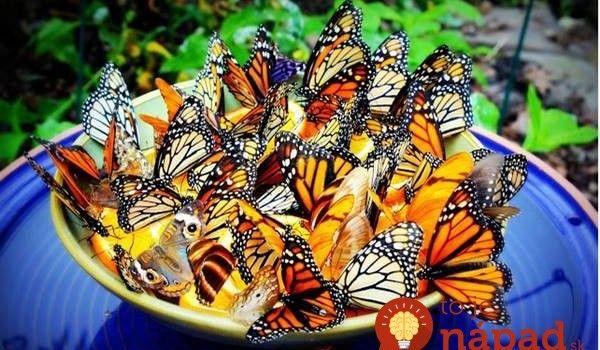 Ako prilákať do záhrady užitočný hmyz, ktorý zatočí so škodcami? Pomôže tento jednoduchý tip!