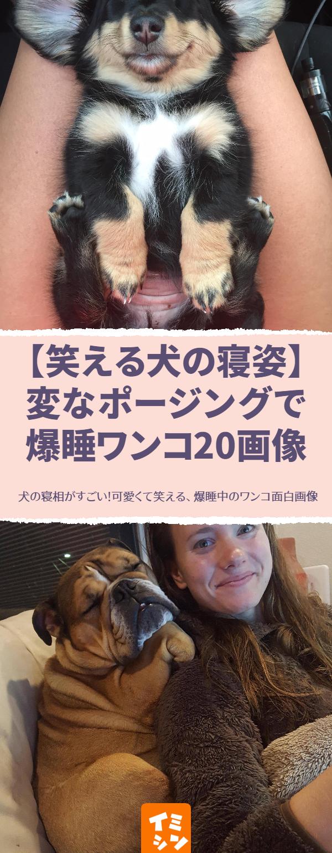 笑える犬の寝姿 変なポージングで爆睡ワンコ20画像 可愛いだけでなくちょっと天然 と笑いの才能まで持ち合わせた犬ですが 眠っている時ですらその才能は遺憾なく発揮されているようです 犬 寝相 犬 寝相 おもしろ 犬 かわいい 犬 爆睡 犬 面白画像 犬