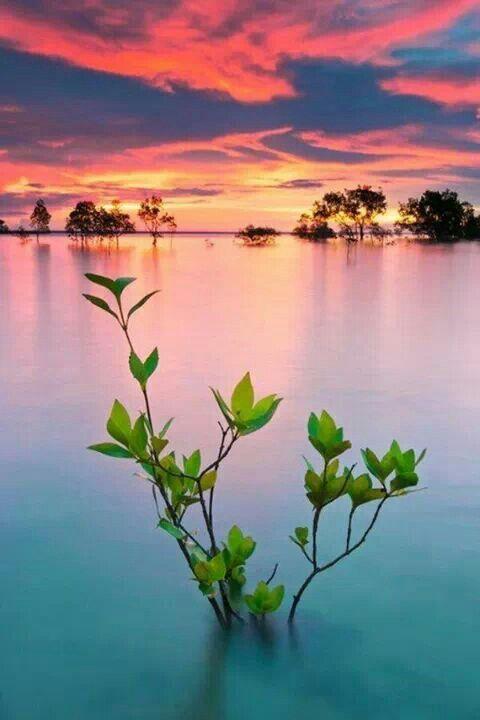 Marea alta en Darwin, Australia.