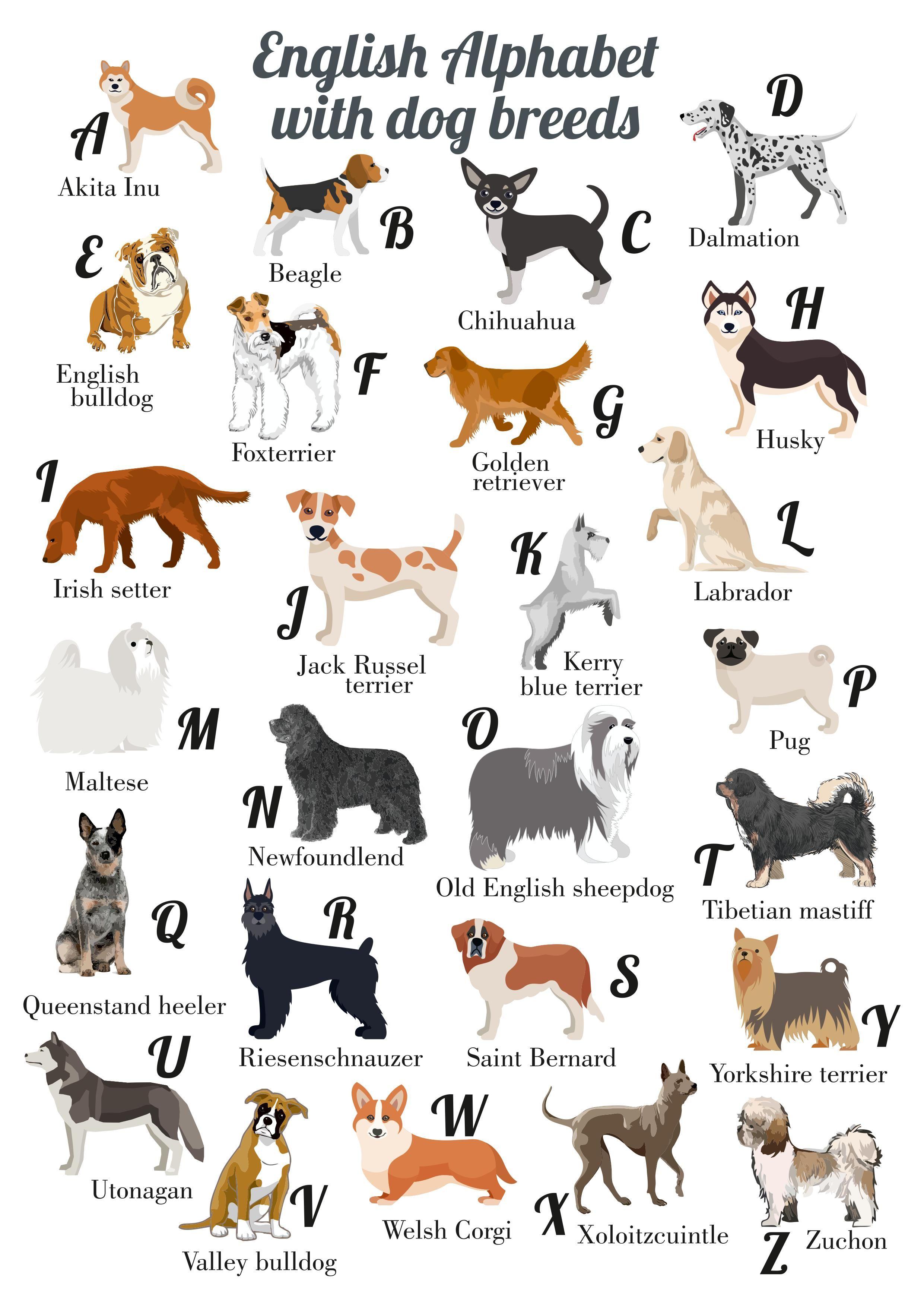 Printable dogs Alphabet for a Dog lover Dog alphabet