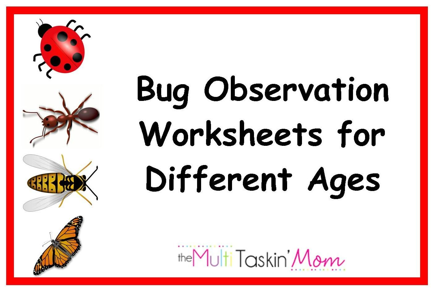 5 Tips For Bug And Insect Observation