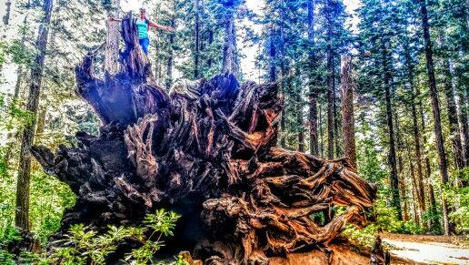 My roots run deep!