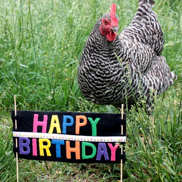 Chicken Farmer Birthday Meme