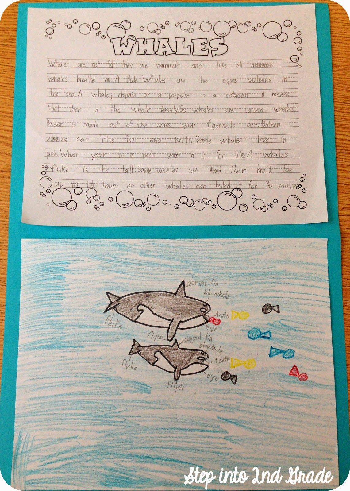 Whale Writing And Diagram