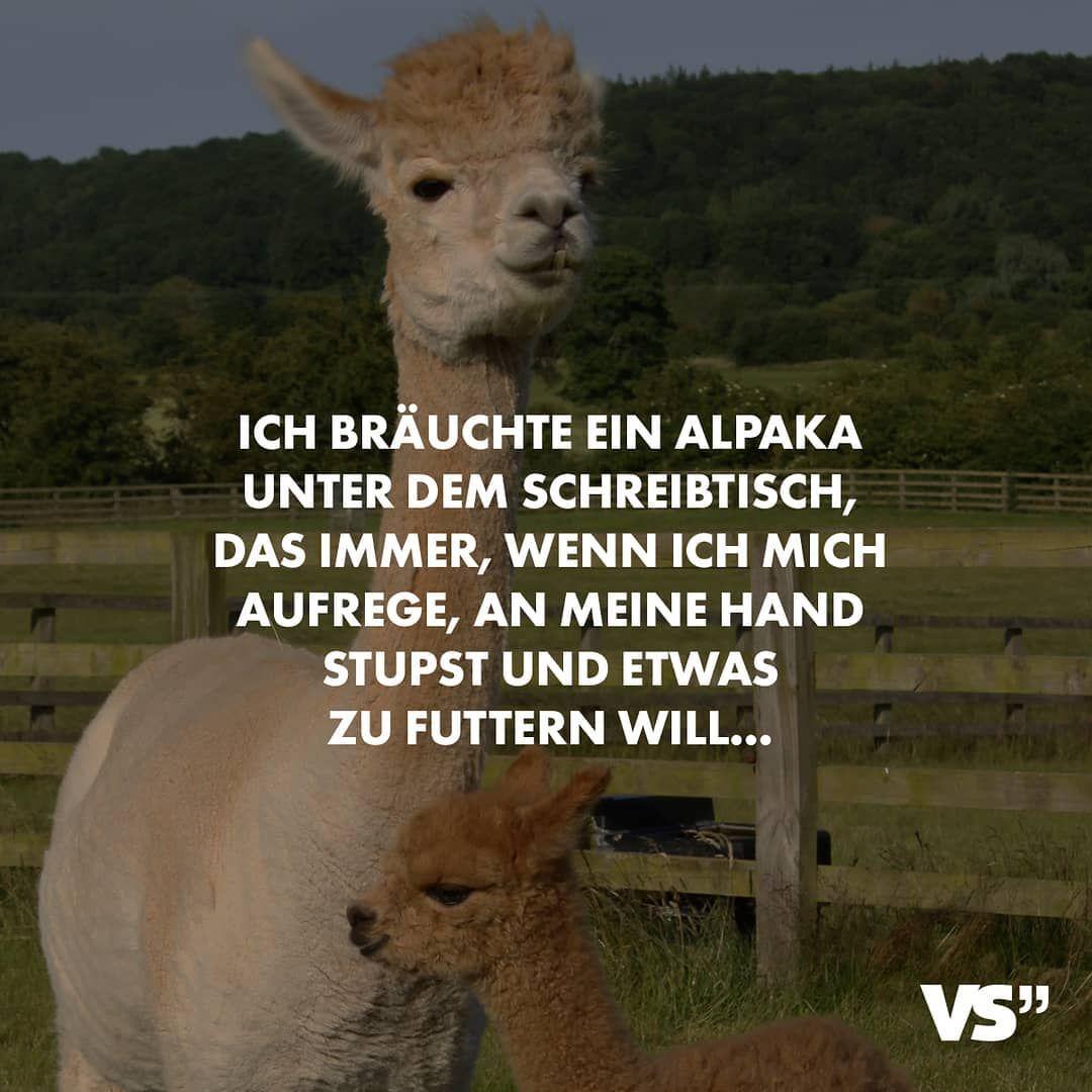 Wer Noch Visualstatements Spruche Alpaka Alpaca Suss