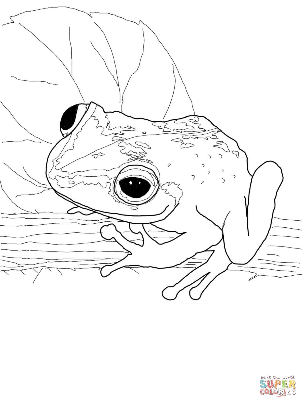 Coqui frog coloring page from Frogs category. Select from 27968 ...