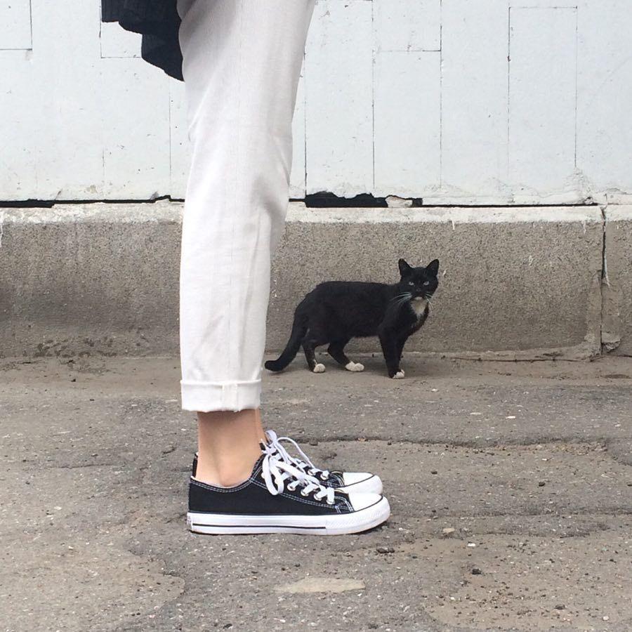 cat & legs