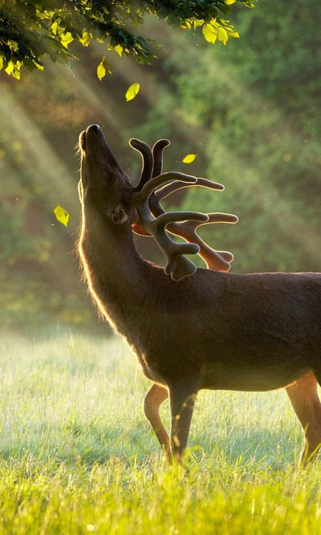 Finding Neverland Majestic Animals Nature Animals Animals