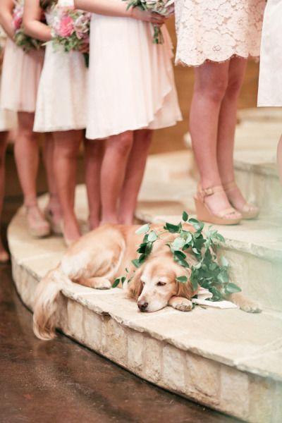 Rustic Clic Oaks Ranch Wedding Ideas Dog Several Pics I Loved