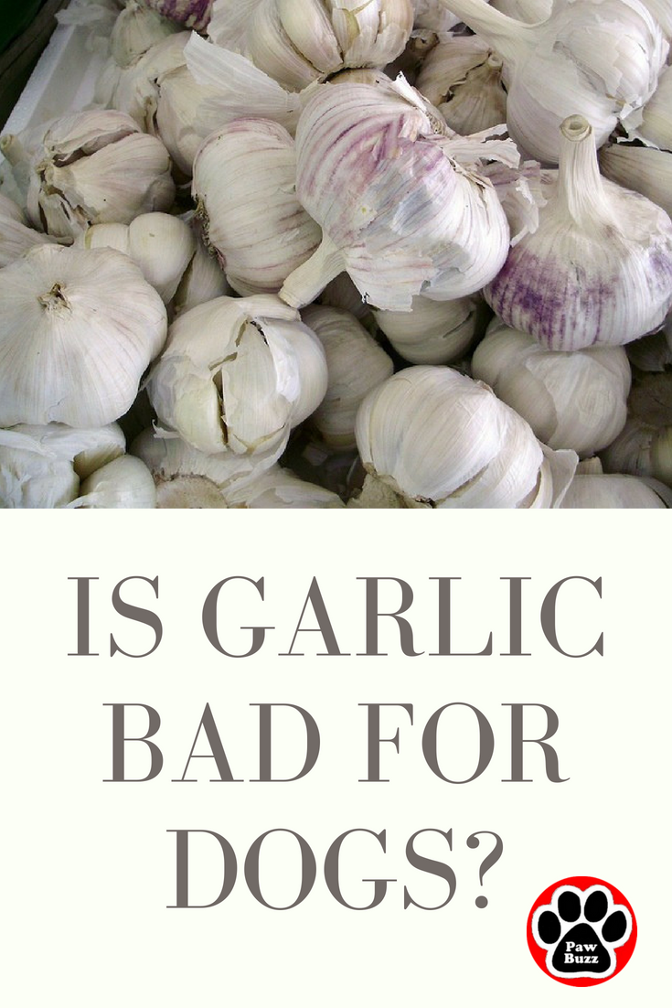 Is Garlic Bad For Dogs When It Comes To Garlic Most Dog Owners Are Divided On Their Opinion Check Out This Article To Can Dogs Eat Dog Eating Dog Nutrition
