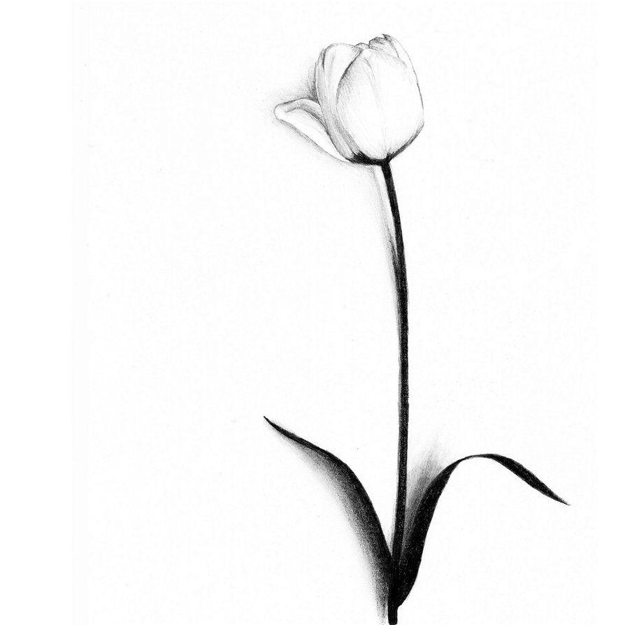 White Tulip Clipart Best Clipart Best Tulip Tattoo Tulip Drawing Flower Tattoo Designs