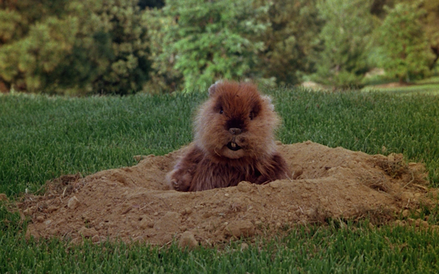 10 Best Caddyshack Scenes Quotes In Honor Of Its 35th Anniversary Kenny Loggins Streaming Movies Movies