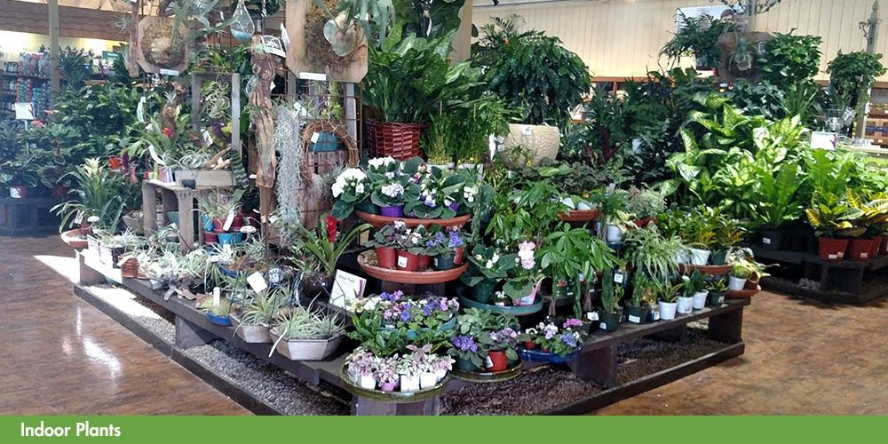 Image Result For Armstrong Garden Centers Image Result For