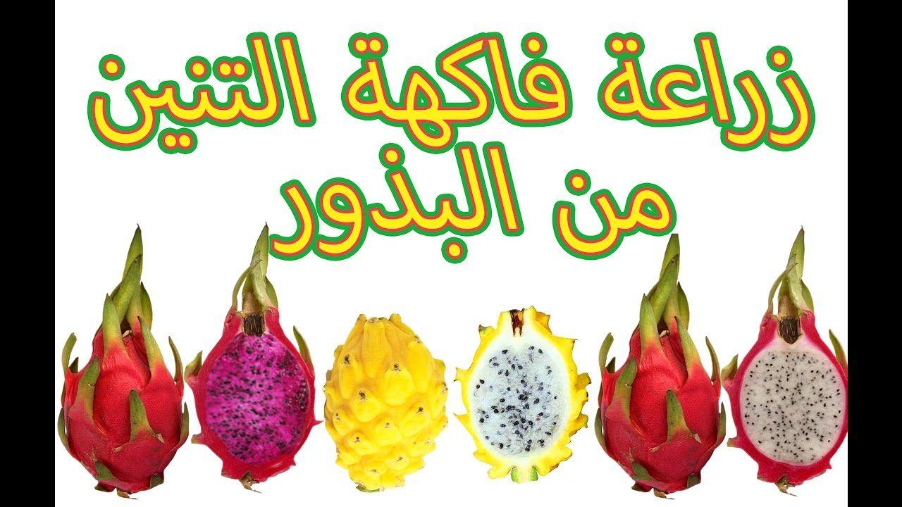زراعة فاكهة التنين من البذور Cultivation Of Dragon Fruit Seeds 1 Group Boards