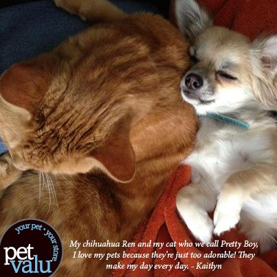 Pet Valu Asked Their Facebook Friends To Write Love Letters To Their Pets Pets Pretty Boys Chihuahua