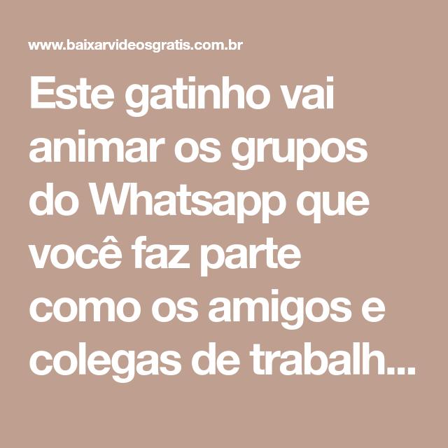 Este Gatinho Vai Animar Os Grupos Do Whatsapp Que Você Faz