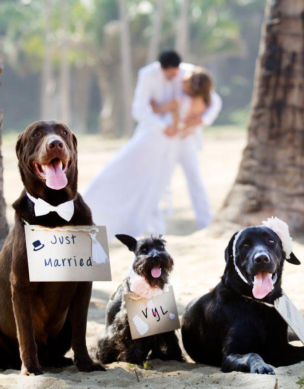 pets and weddings - Buscar con Google | Animal wedding Friends ...