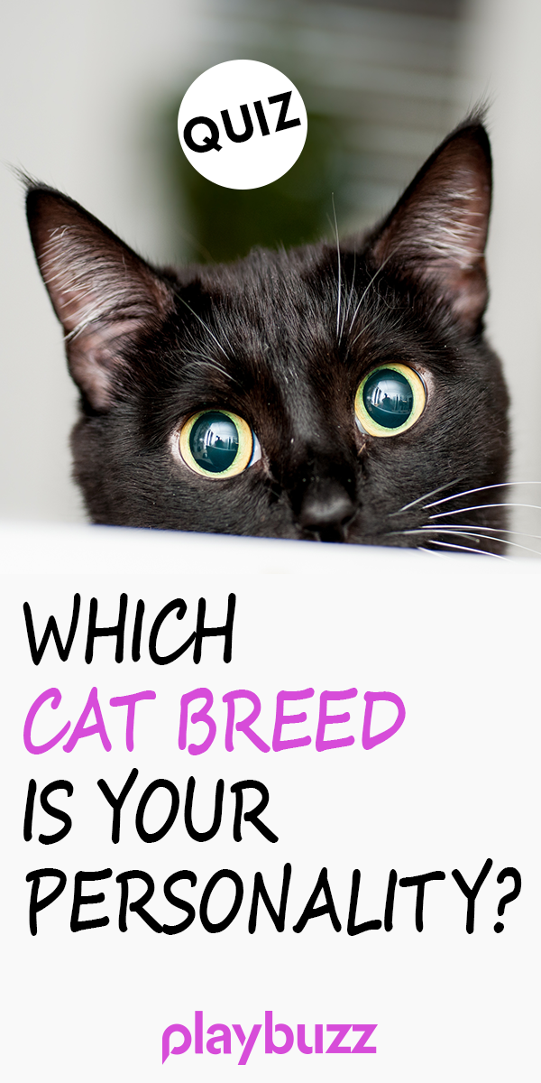 Which Cat Breed Is Your Personality? Cat movie, Cat
