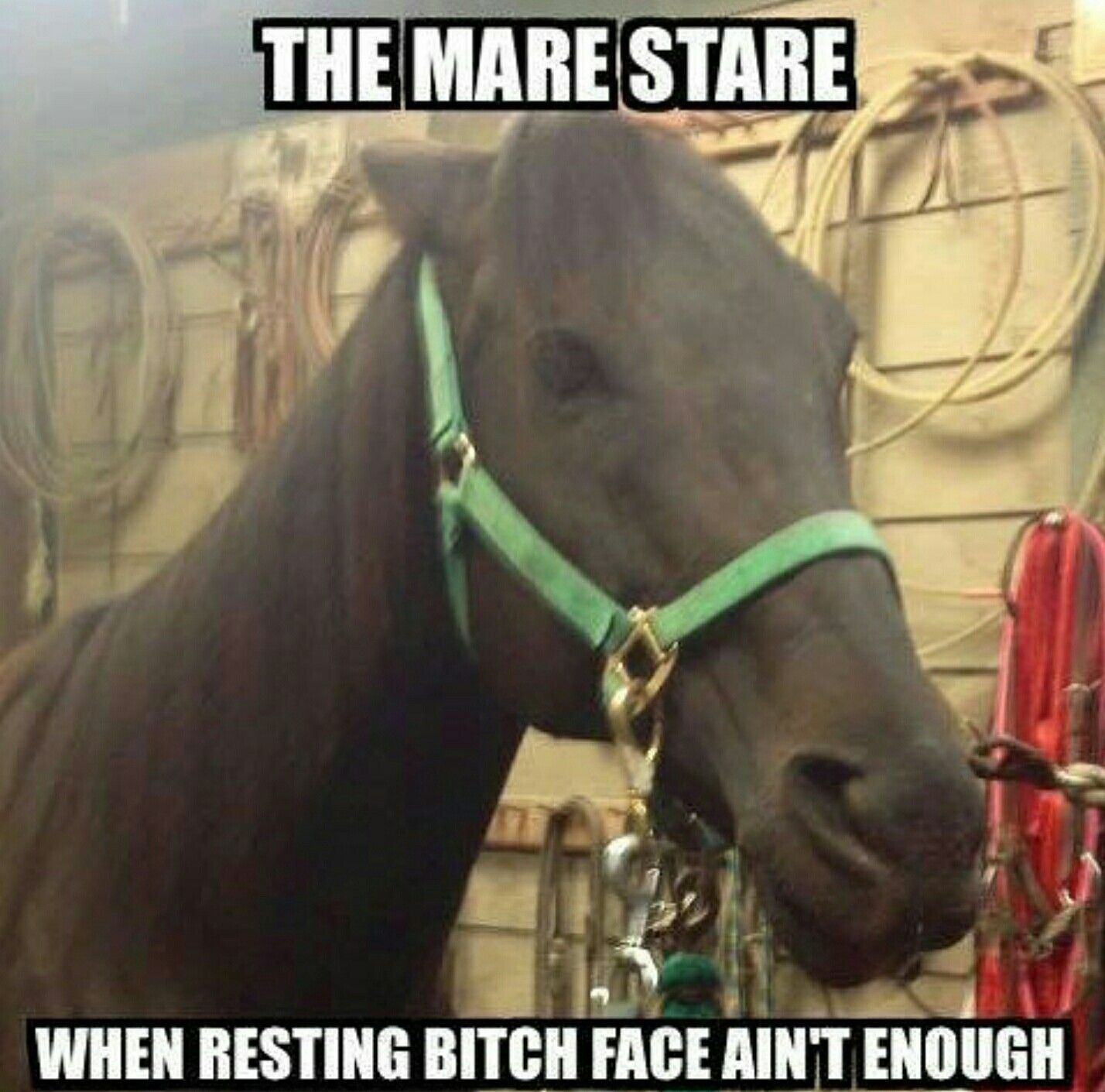The mare the resting bitch face ain't enough!