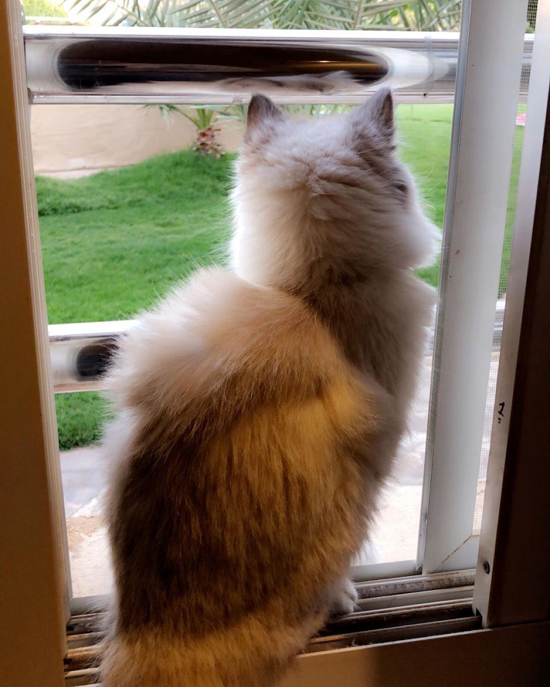 My Love Loly Cat Cat Cute Nise قطة بسة كيوت لطيف الرياض حيوانات Animals قط شيرازي قط هملايا قطط قطه Cats Animals