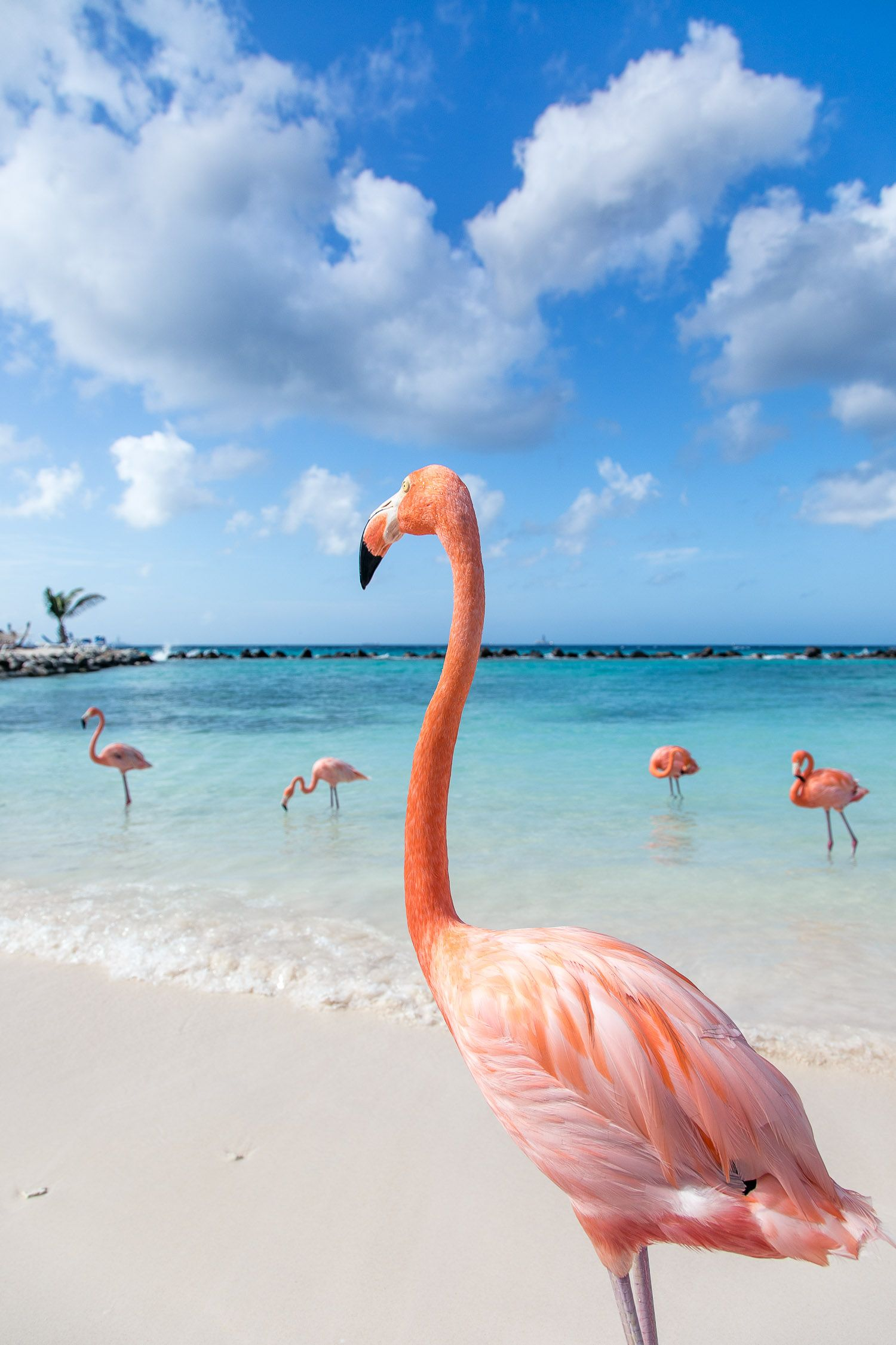 Roze Flamingo Dating-Website