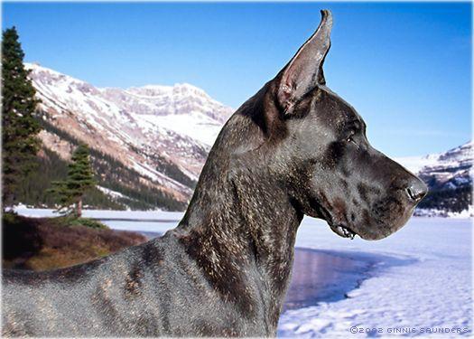 Great Dane 3 Great Dane Dogs Great Dane Great Dane Rescue
