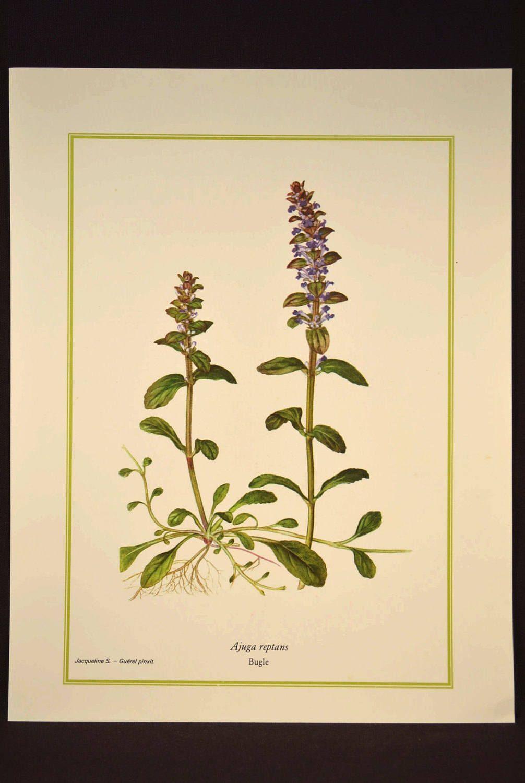 Purple Wild Flower Wall Decor Nature Print Botanical Art | Nature ...