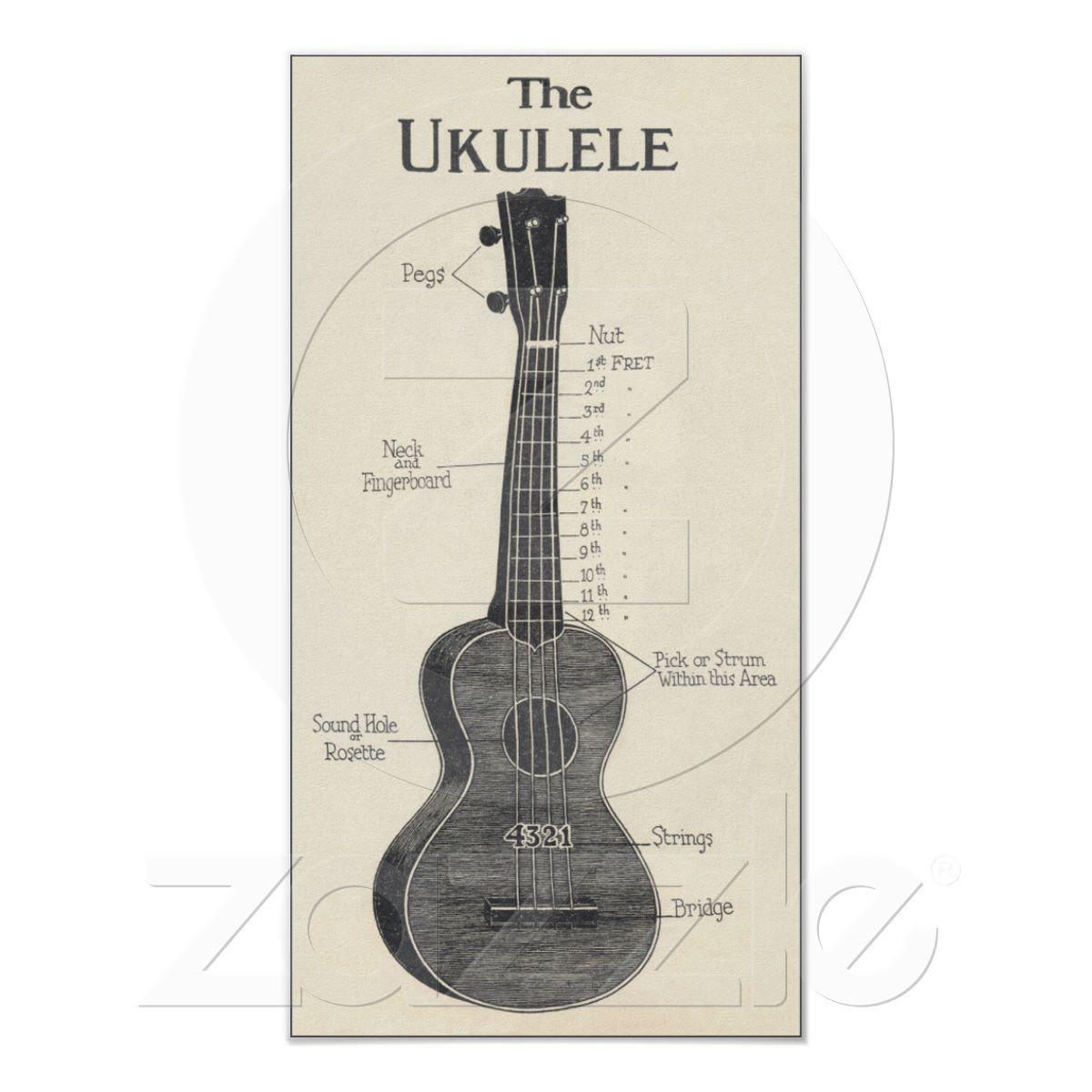 The Ukulele Poster | i <3 Ukulele | Pinterest | Anatomy
