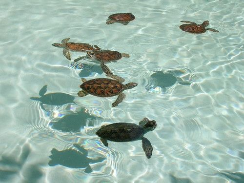 love  sea turtles! yay! always and forever!