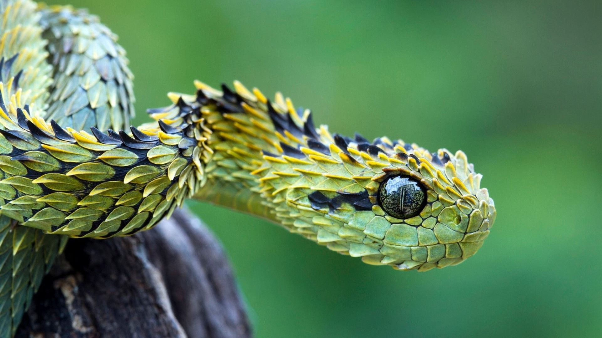 Absolutely stunning creature. | Beautiful snakes, Snake, Cool snakes