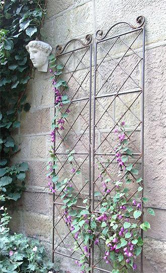 Metal Wall Trellis vine trellis   flowering vines and climbers   pinterest   vine