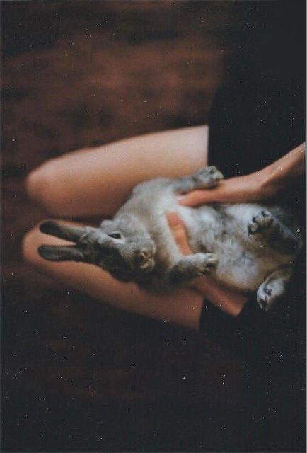 #cute #bunny