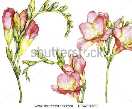 Watercolor With Freesia Flower Freesia Flower Watercolor Drawing Set Watercolor Flowers Flower Painting Flower Drawing