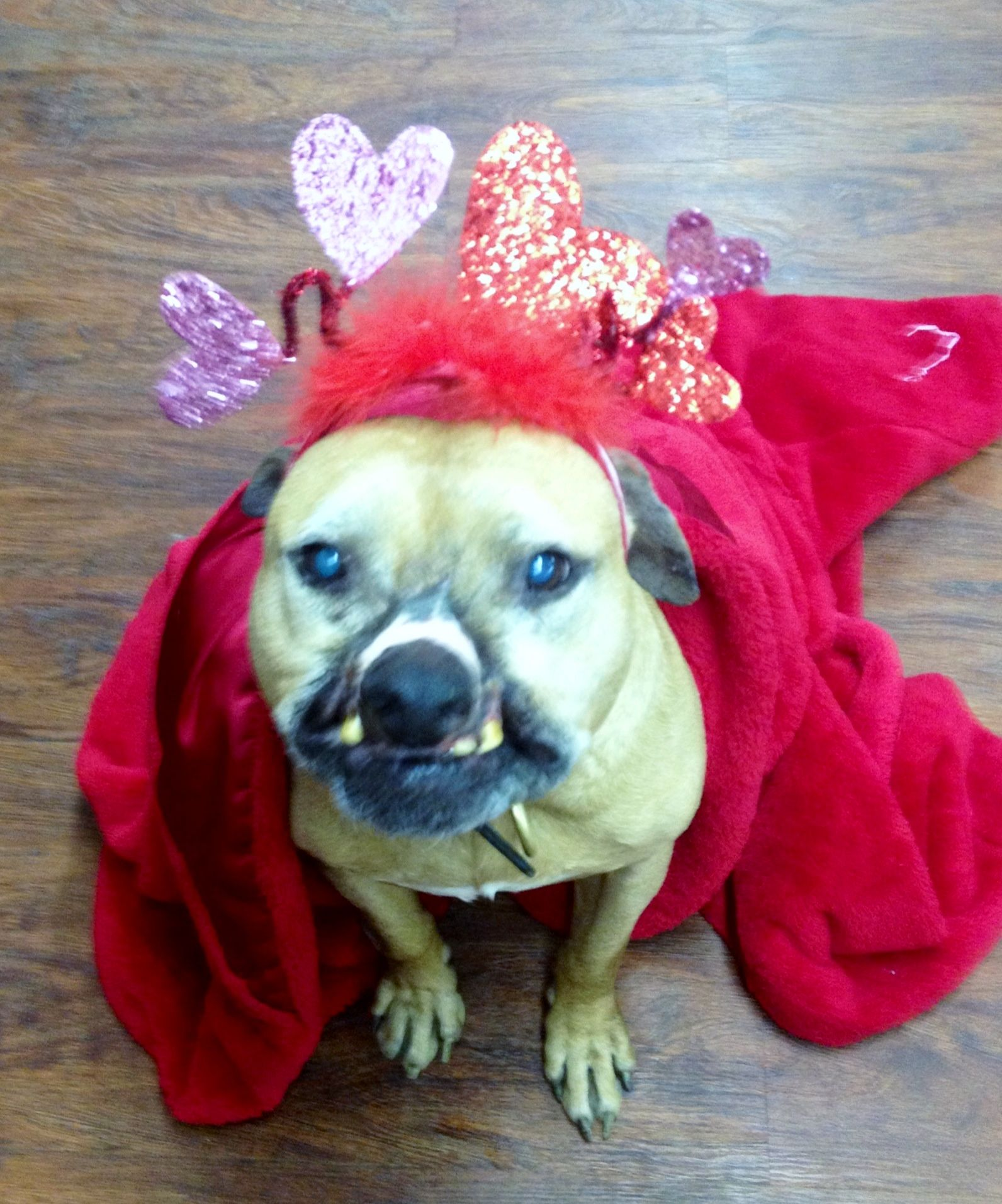 Pit Bulls In Flower Crowns Pitbull Terrier Pitbulls Dog Adoption