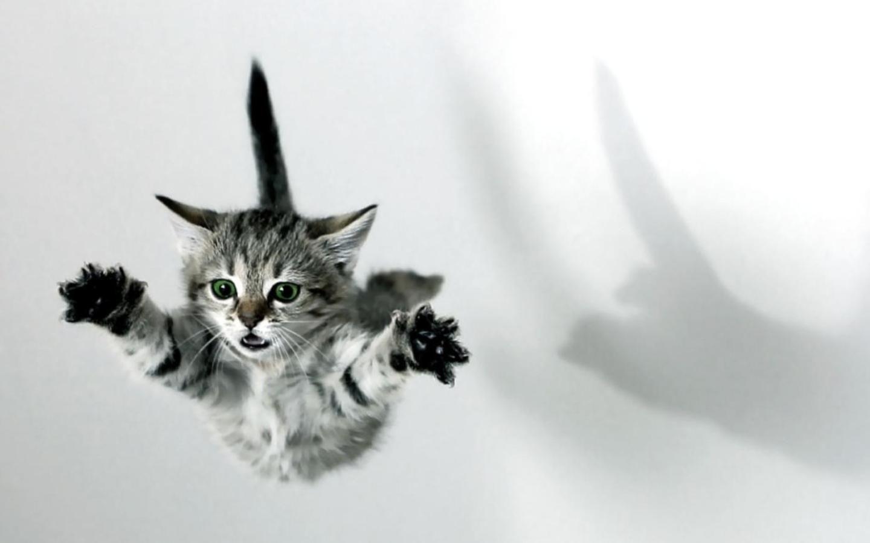 flying kitten #KixxOnlineMoloWin