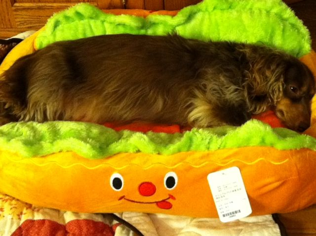 New Quot Hot Dog Bun Quot Bed For My Wiener Dogs Lol Binxie Loves
