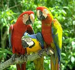 c6b26ea080cdb6d2a72f00ca69e8fad7 - Parrot Jungle And Gardens Miami Fl