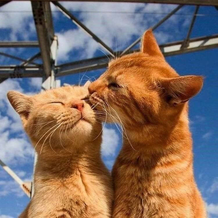 10 Pictures Of Extremely Lovey-Dovey Cats That Will Melt Your Heart - I Can Has Cheezburger?