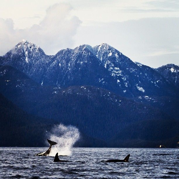 how to go to tofino from vancouver