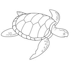 resultado de imagen para tortuga para dibujar | carátulas