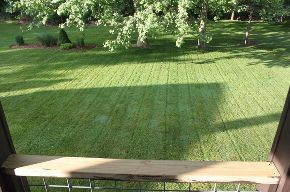 6 tips to a great lawn without using chemicals, gardening, go green, landscape, lawn care, A lawn without chemical fertilizers
