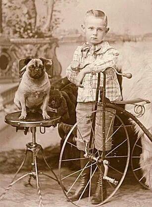 Vintage Pug Pugs Pug Dog Cute Pugs