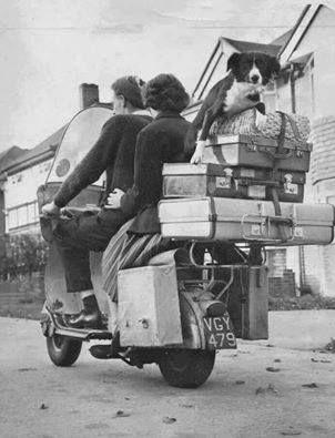 Vespa family, 1950s.    #dog #moto #vespa #oldphoto #oldphotos