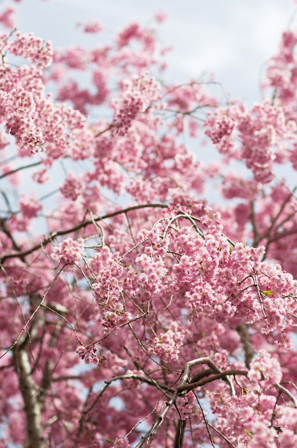 Gorgeous Pink Nature Photography Blossom Trees Different Types Of Flowers